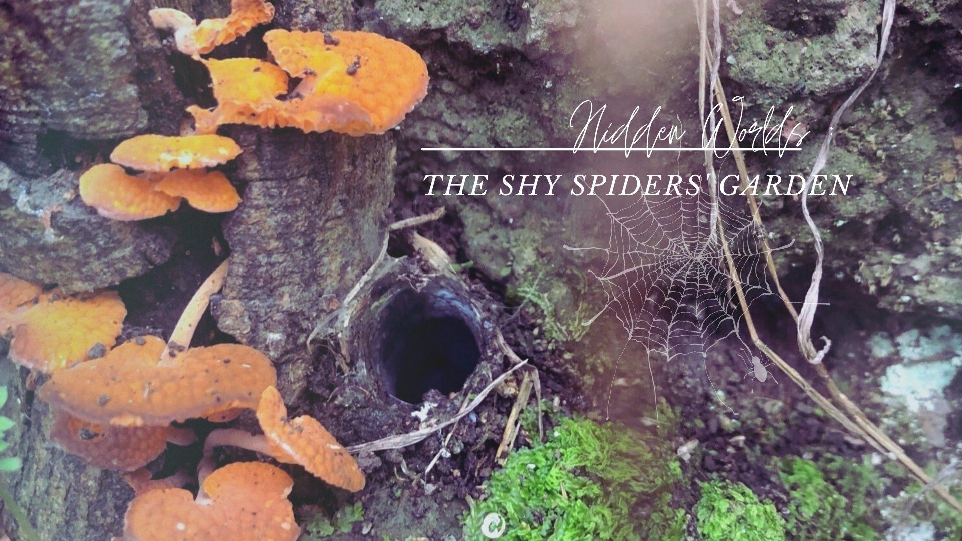 Shy Spider banner - JPG